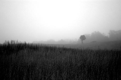 Foggy_day_on_tupancy_links_bw